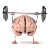 Мозъчна функция (11)