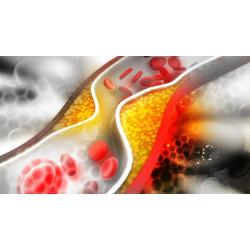 PQQ понижава нивата на холестерола