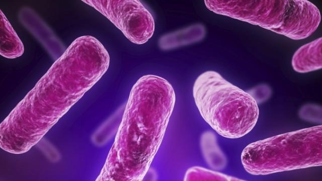 Храносмилателните ензими от Doctor`s Best помага да се възстанови правилната бактериална флора